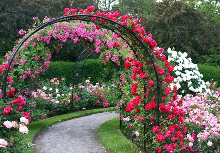 Арки для роз своими руками фото