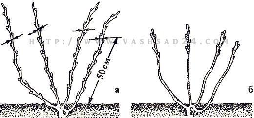 Формирующая обрезка кустарников