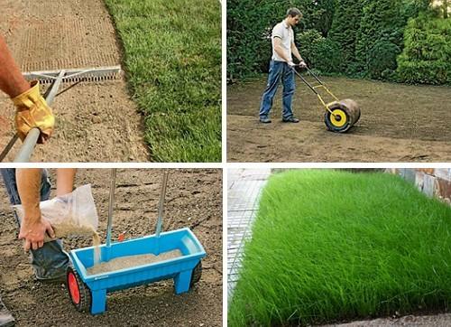 Когда лучше сеять газон