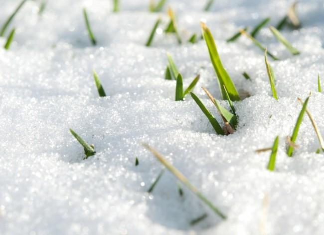 Уход за газоном зимой
