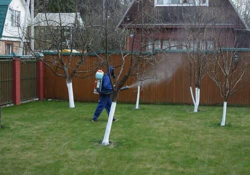 Санитарная обработка сада