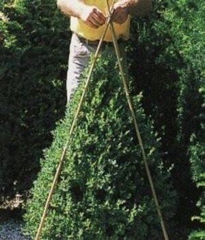 Стрижка хвойных растений